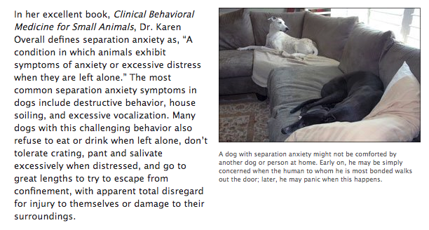 Separation Anxiety (WDJ)