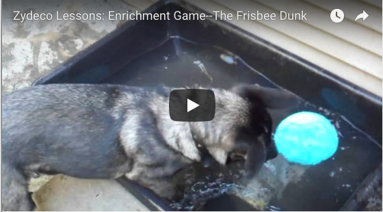 Enrichment Games for Puppies (Sarah 0)