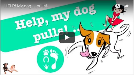 Help! My Dog Pulls!
