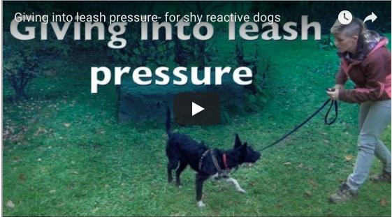 Moving Into Leash Pressure