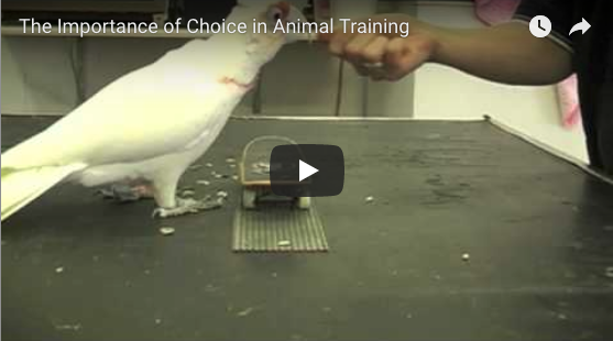 The Importance of Choice in Animal Training