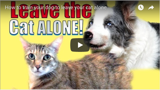 Teaching a Dog to Leave a Cat Alone