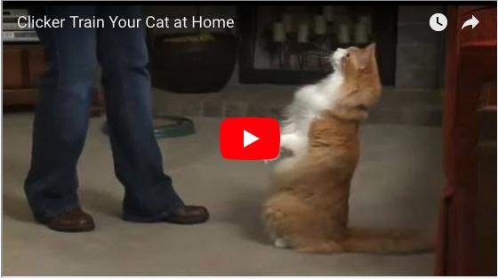 Beginning cat training