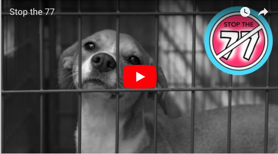 The Most Important Video for parents and kids to watch (Stop the 77 'The Family Dog')