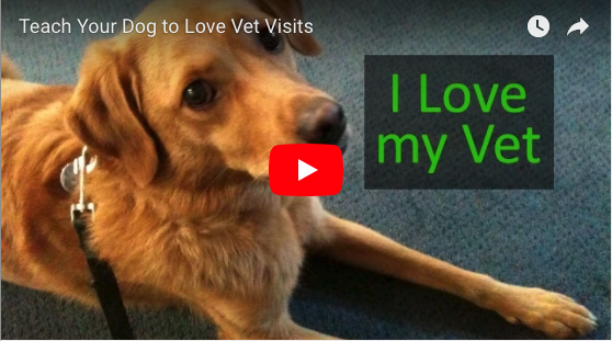 Teach your Dog to LOVE Vet Visits