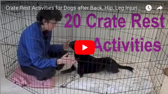 Activities for a Dog on Crate Rest
