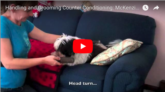 Teaching a dog to enjoy handling and grooming