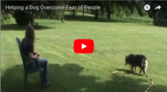 Treat and Retreat–overcoming fear of people (Rise)