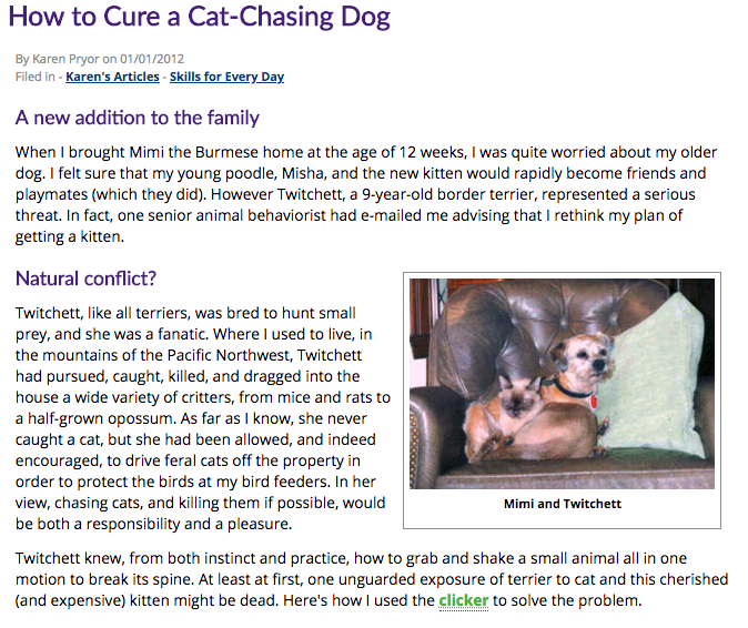 How to Cure a Cat Chasing Dog