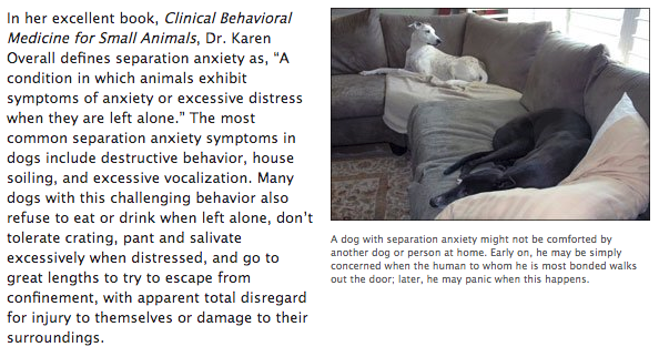 Article on Canine Separation Anxiety
