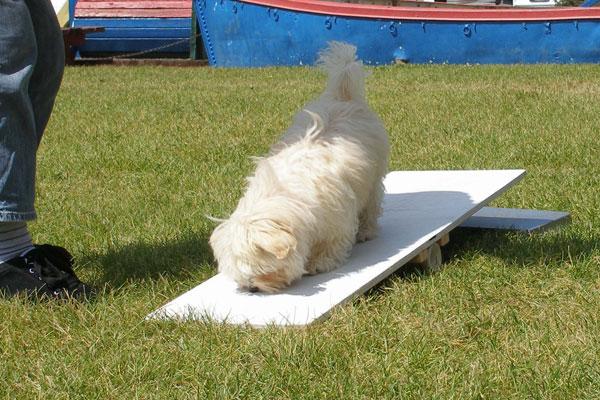 Performance Puppy